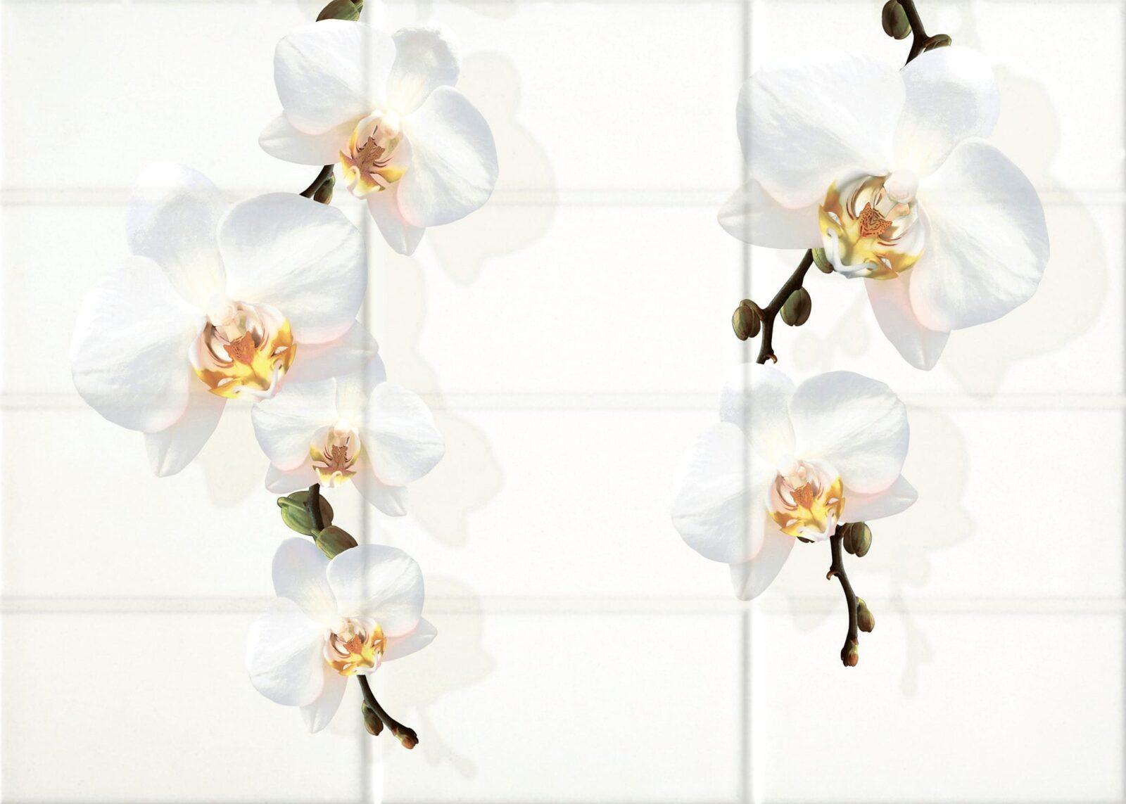 Декор Cersanit Mono цветы 2 25*35